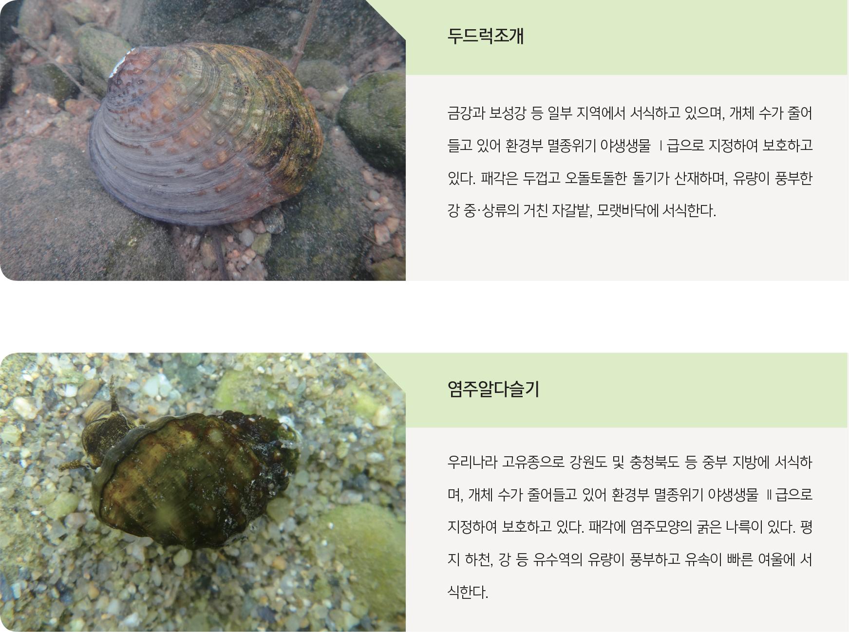 멸종위기 저서성 대형무척추동물