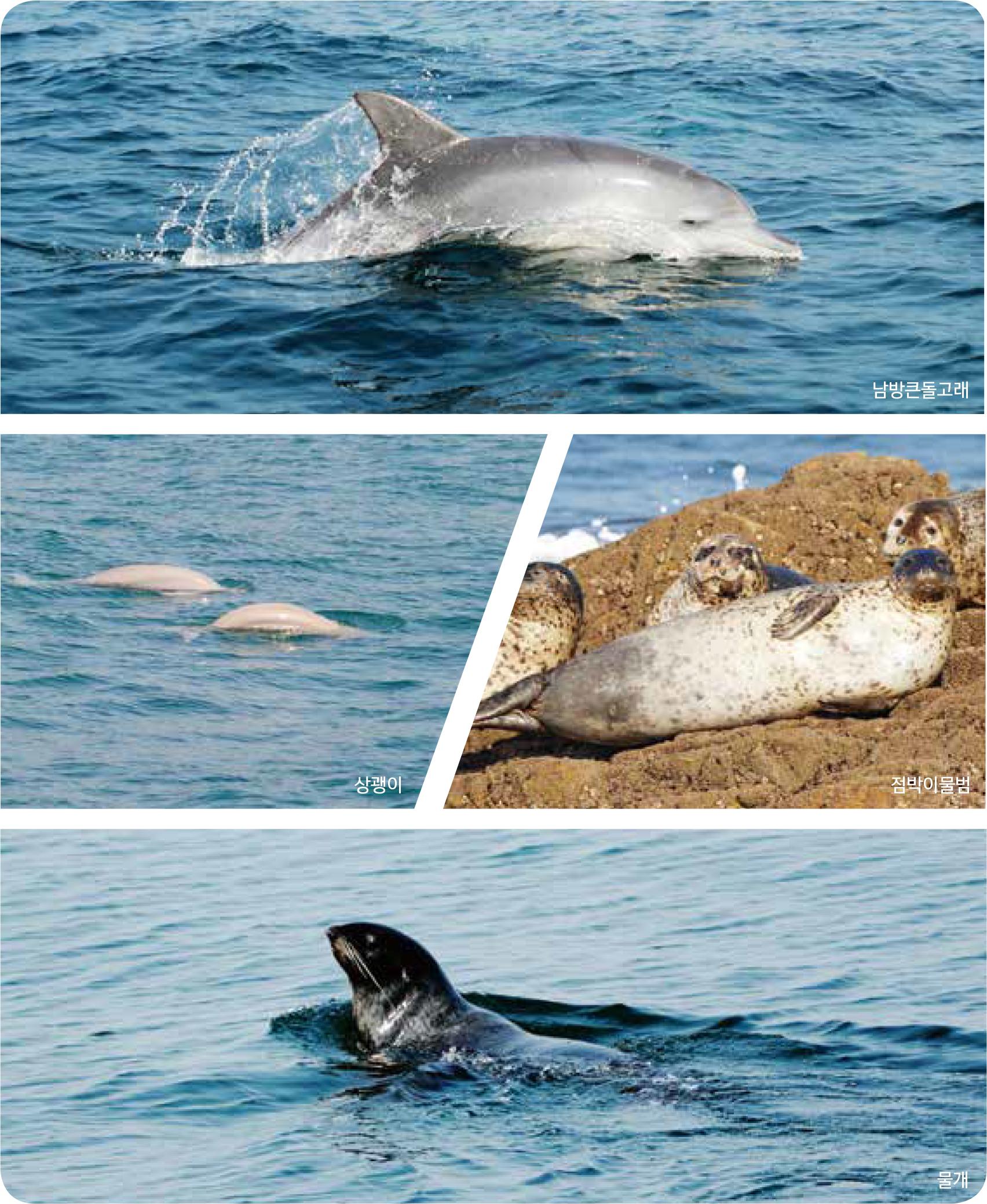 주요 상어류