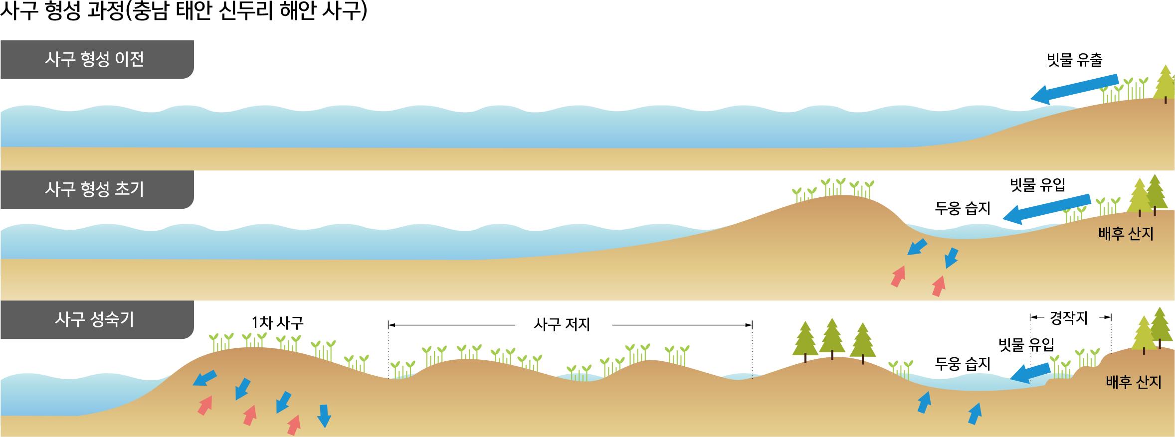 사구 형성 과정(충남 태안 신두리 해안 사구)