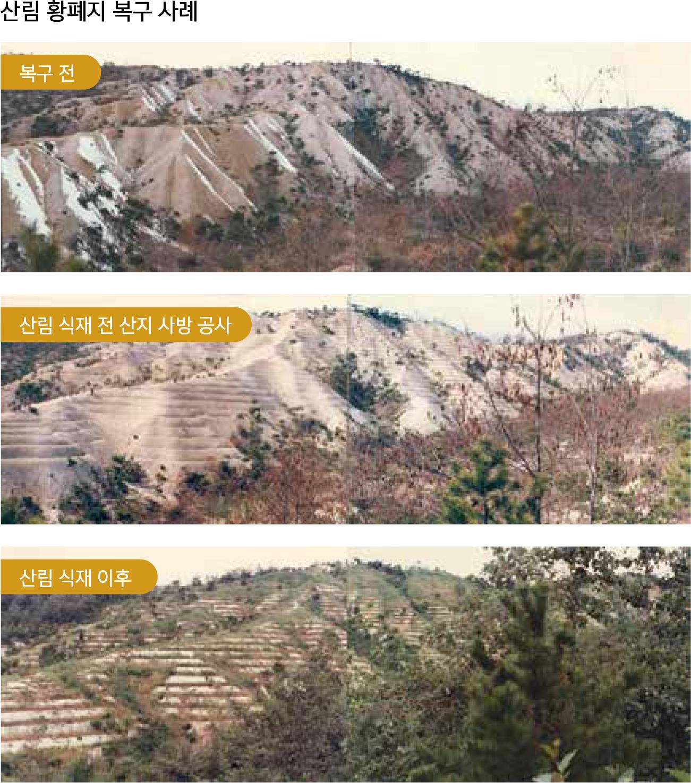 산림 황폐지 복구 사례