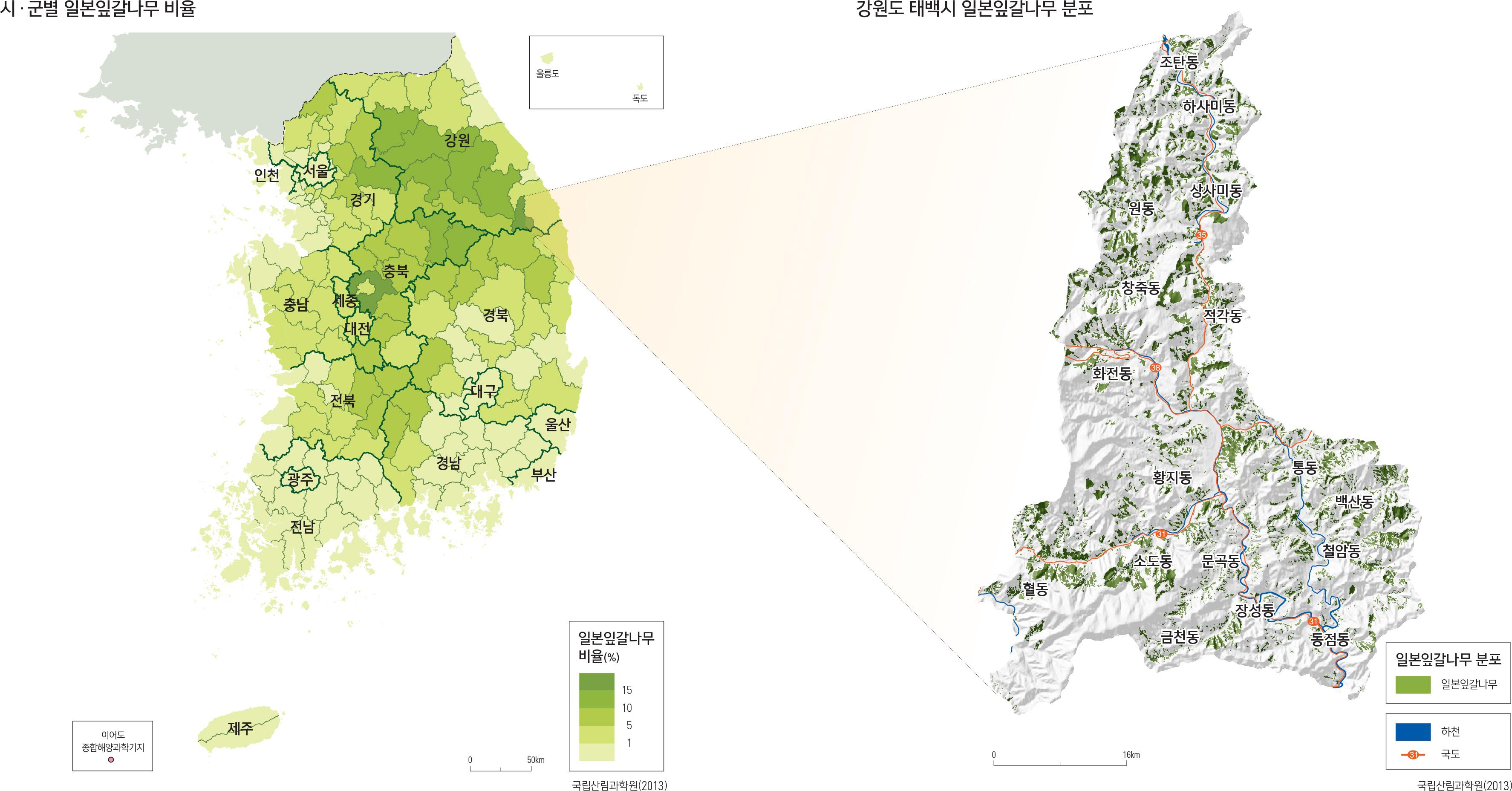 시·군별 일본잎갈나무 비율   /   강원도 태백시 일본잎갈나무 분포강원도 태백시 일본잎갈나무 분포