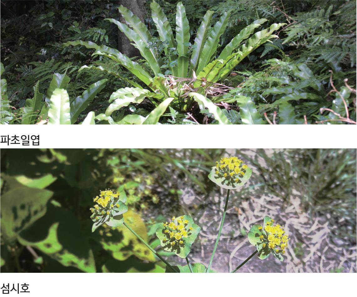 물구계학적 특정 식물 V등급