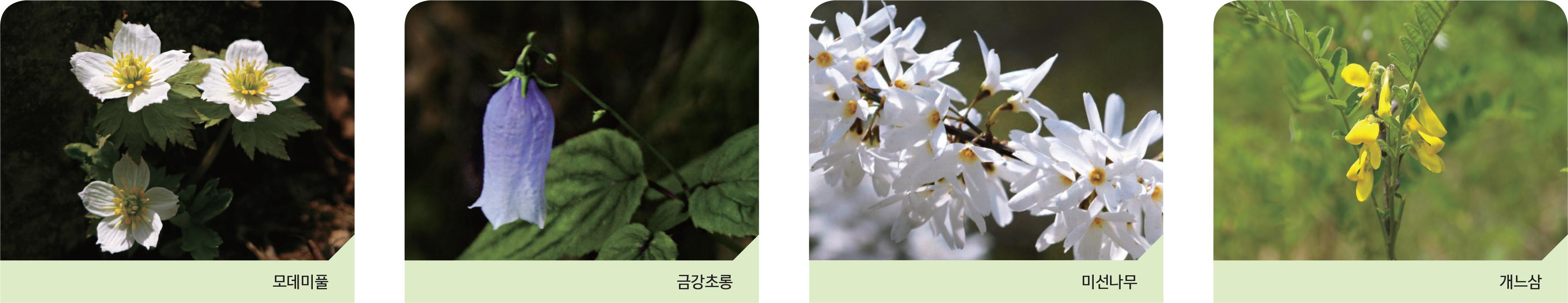 주요희귀식물