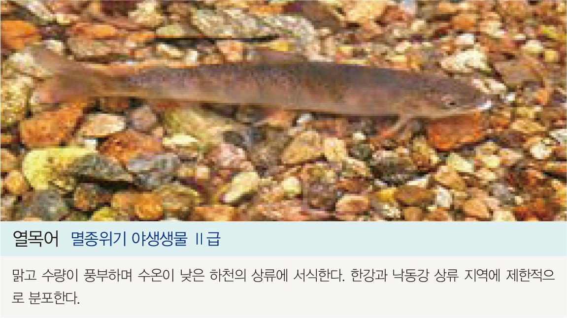 열목어 멸종위기 야생생물 II급