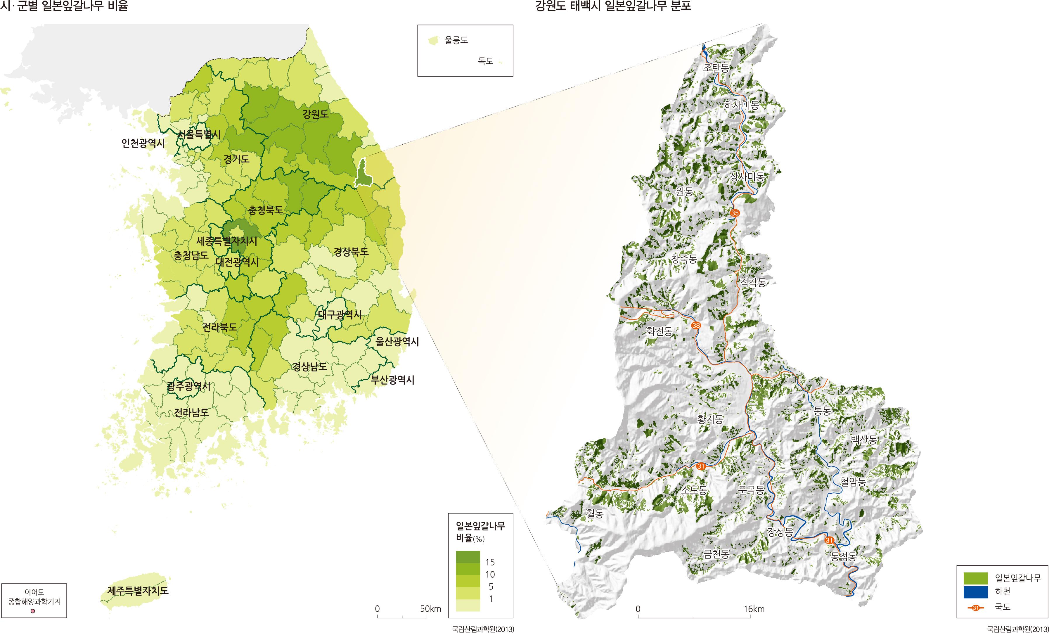 시 · 군별 일본잎갈나무 비율 / 강원도 태백시 일본잎갈나무 분포