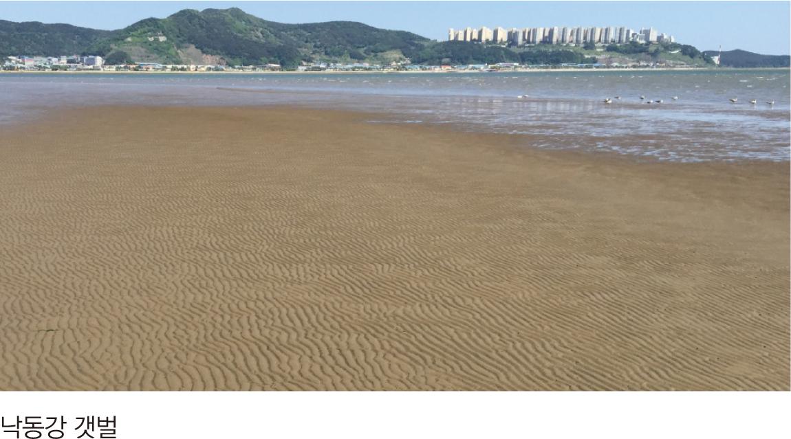 낙동강 갯벌