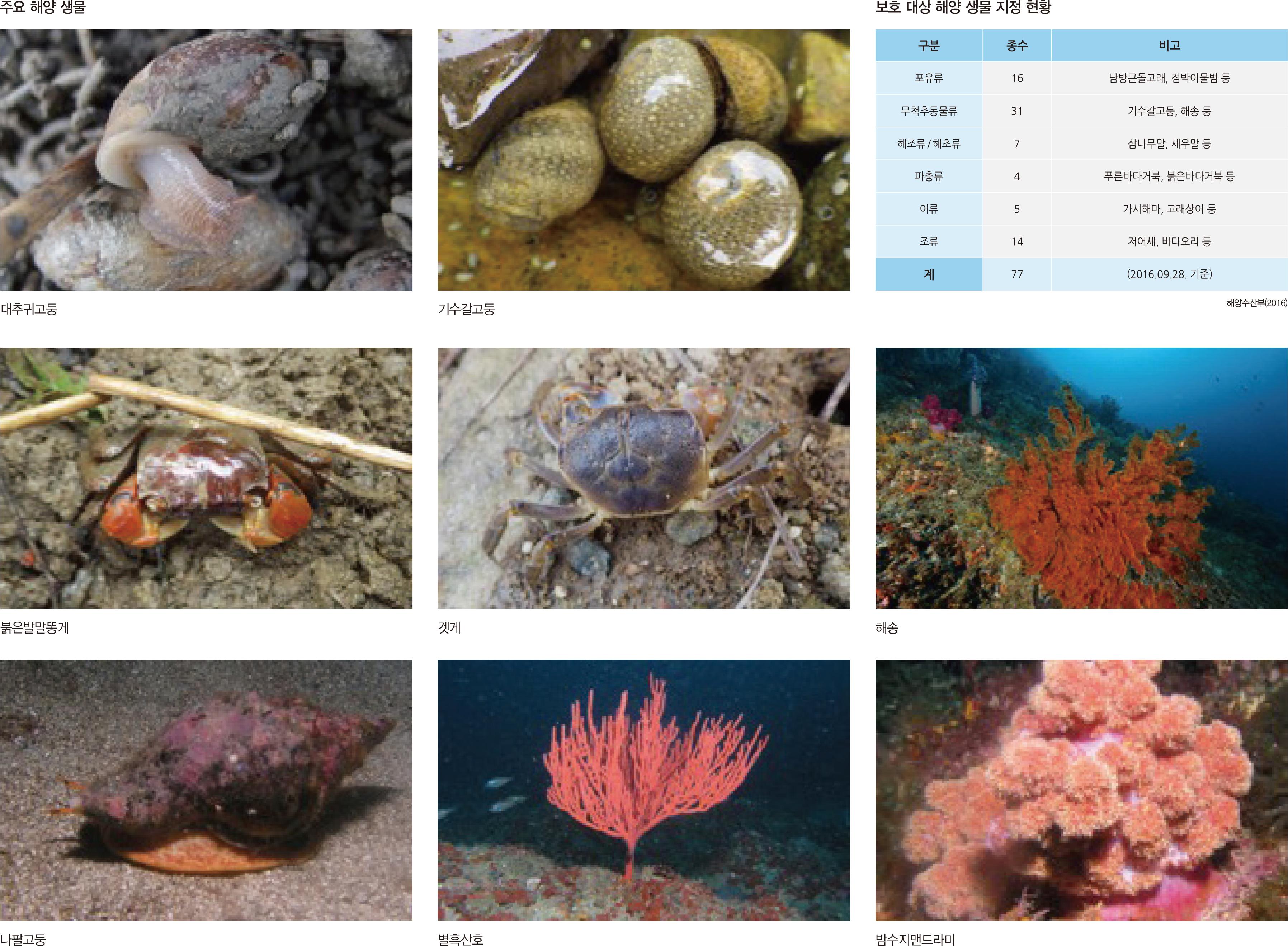주요 해양 생물