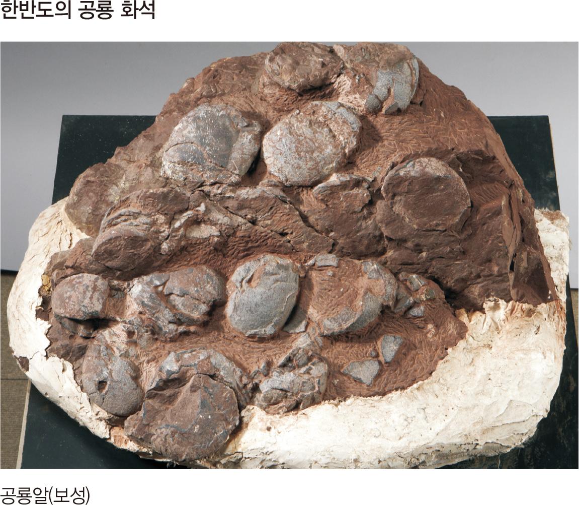 한반도의 공룡 화석