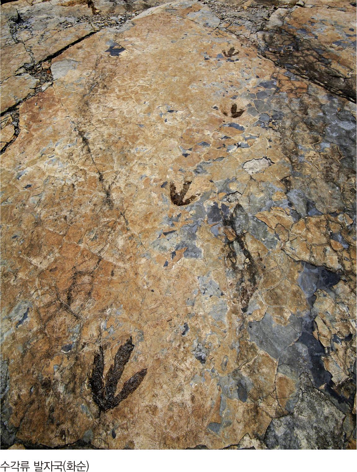 수각류 발자국(화순)