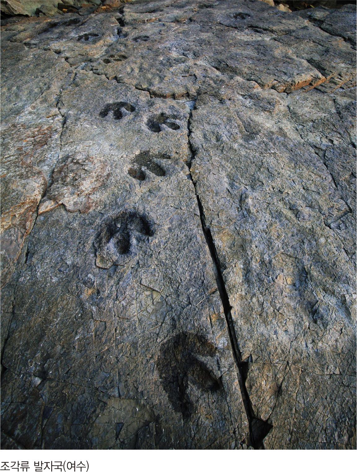 조각류 발자국(여수)