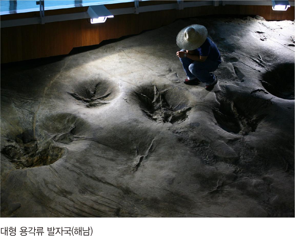 대형 용각류 발자국(해남)