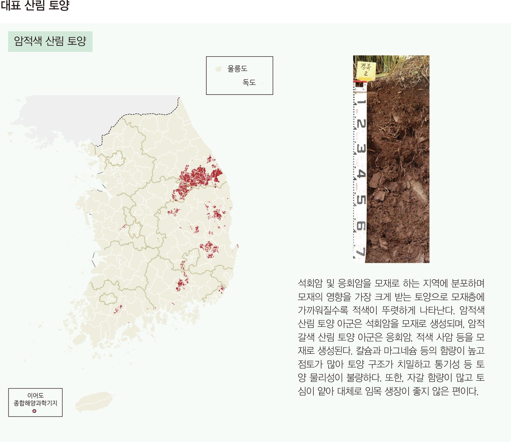 대표 산림 토양 암적색 산림 토양
