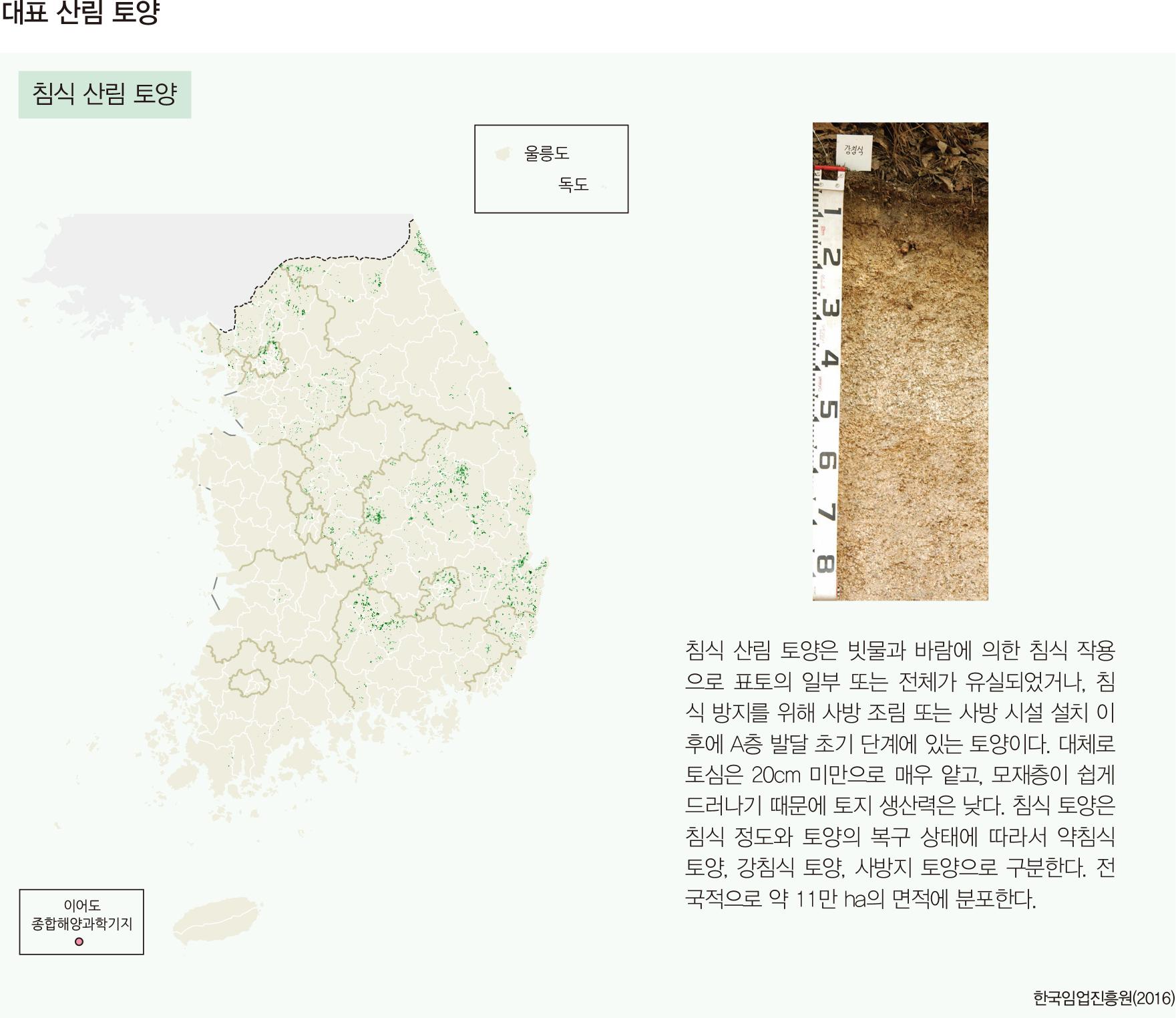 대표 산림 토양 화산회 침식 산림 토양