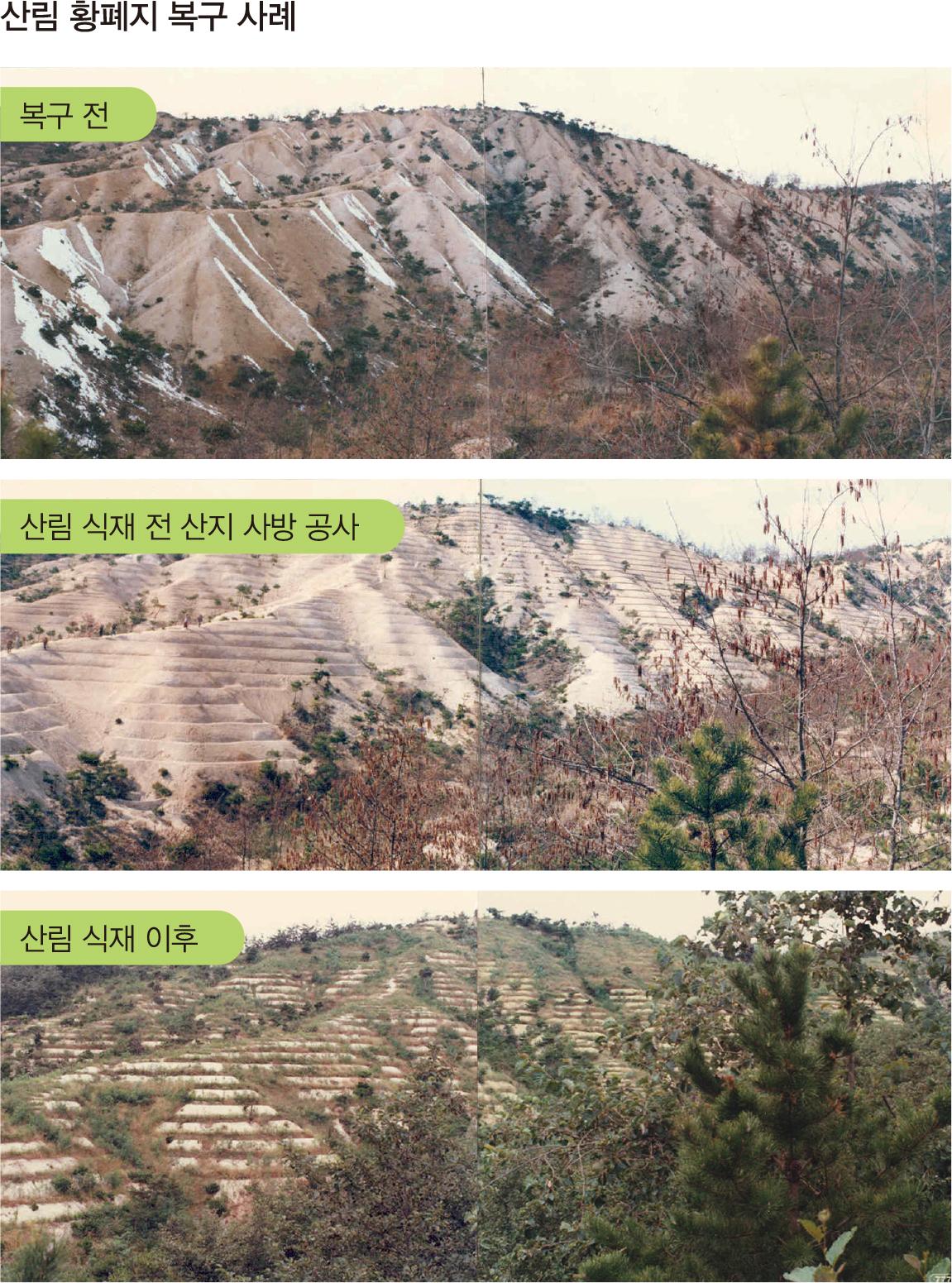 산림황폐지복구사례