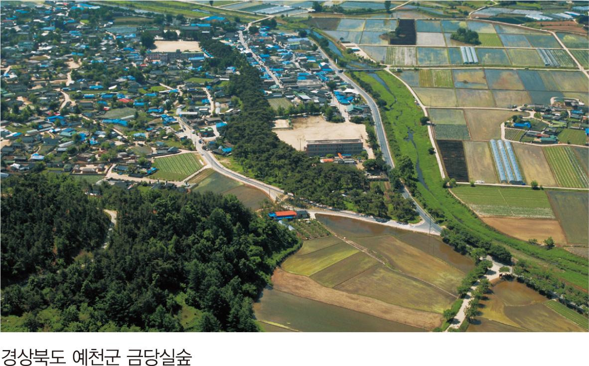 경상북도 예천군 금당실숲