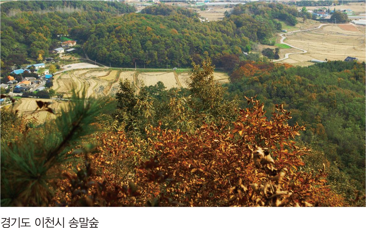 경기도 이천시 송말숲