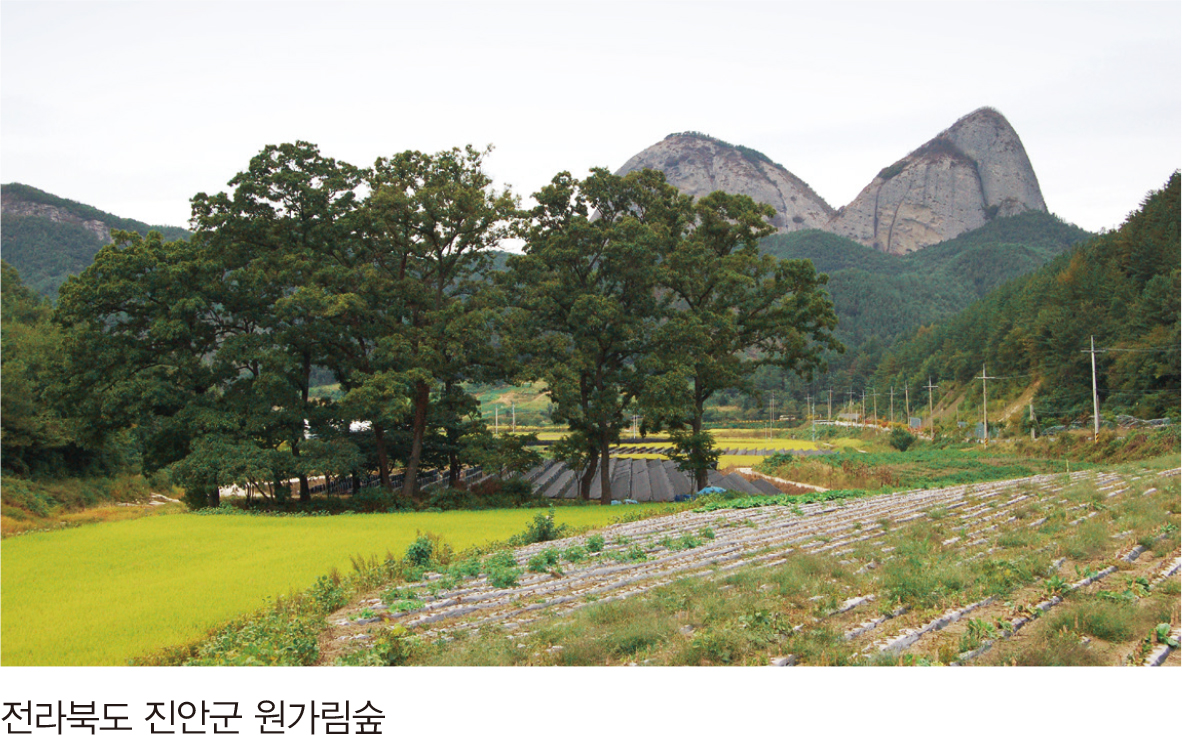 전라북도 진안군 원가림숲