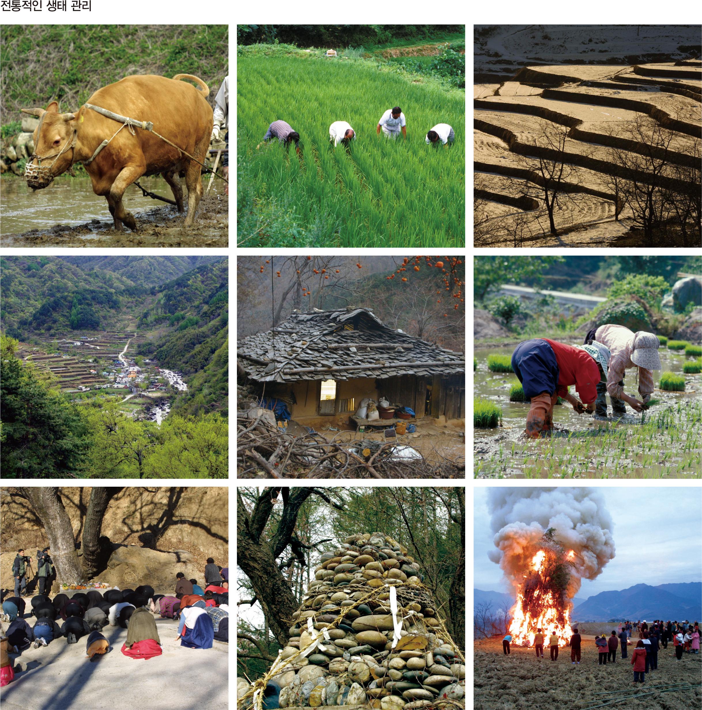 전통적인 생태 관리