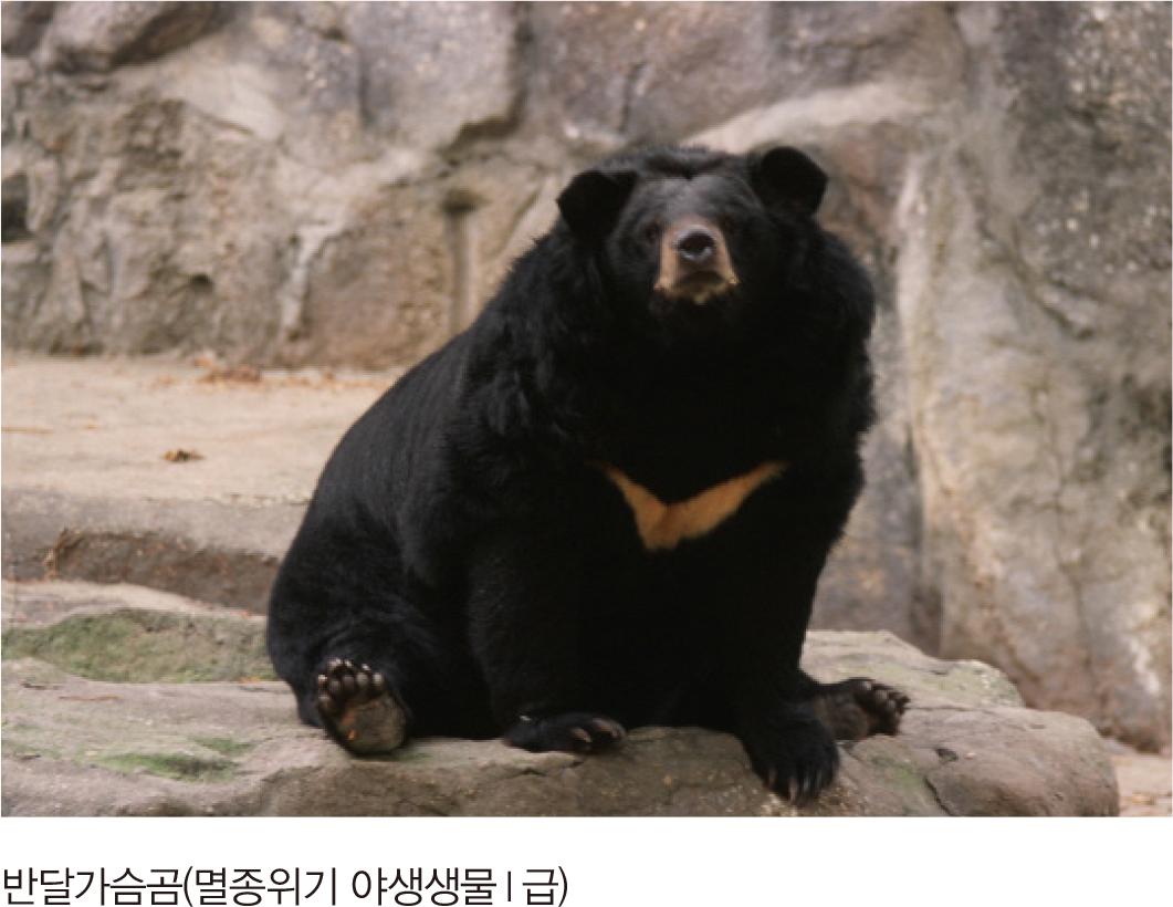 반달가슴곰(멸종위기 야생생물I급)